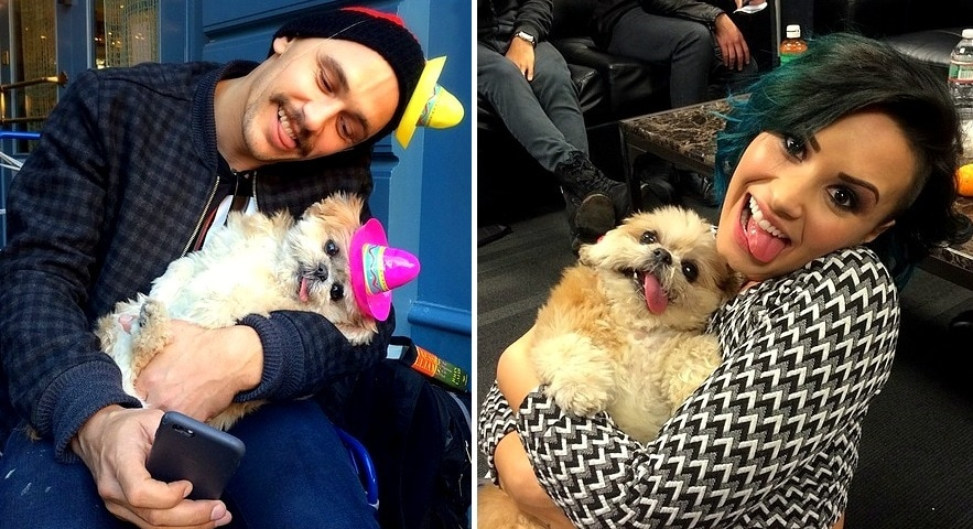 Marnie, the Dog Who Can't Stop Charming Celebrities