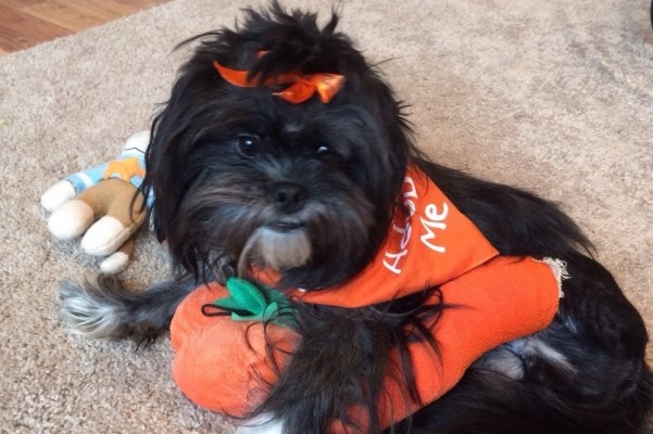 Homeless Individuals Rescue Injured Shih-Tzu