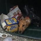 Garbage Man Saves Emaciated Dog Found in Trash