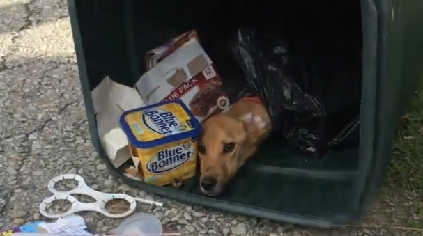 Garbage Man Saves Emaciated Dog Found in Trash