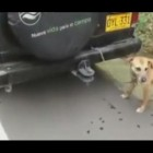 Drivers save Dog Tied to Car's Rear Bumper