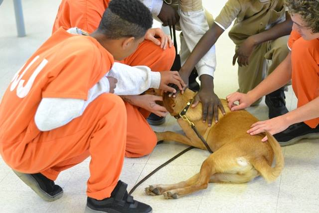 Shelter Dogs Find Forever Homes Thanks to Juvenile Detention Program