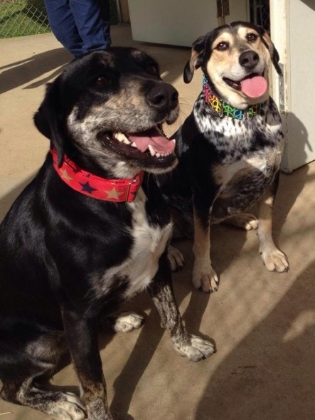 Panda (left) and Bella. Photo Credit: Rescue 2 Restore.