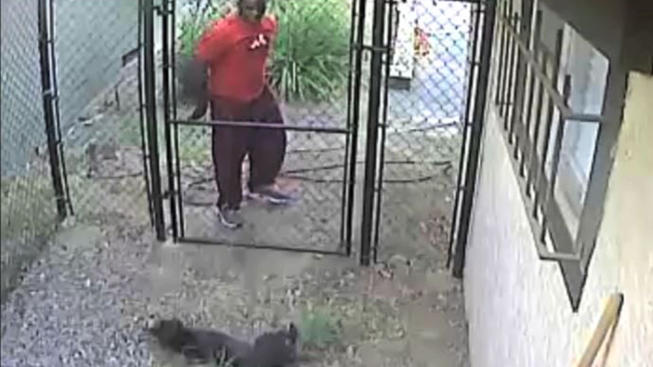 Authorities Identify Man Who Threw Puppy Over Six-Foot Fence