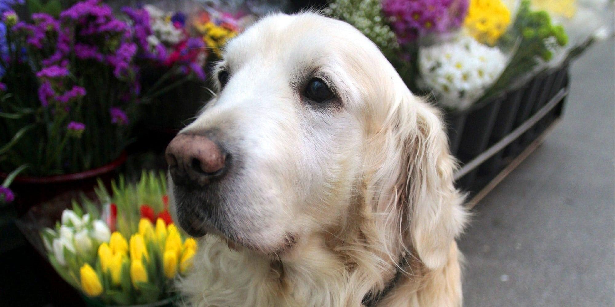 Lugo Plaza's Friendliest Dog Passes Away