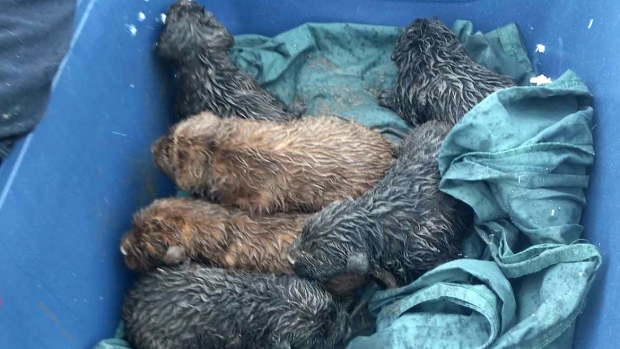 Abandoned Dogs Rescued from Garbage Dump