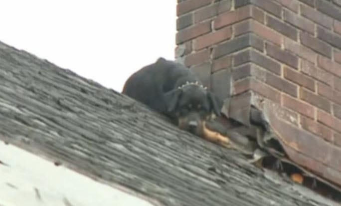 Ohio Firefighters Save Malnourished Dog Stranded on Home's Roof