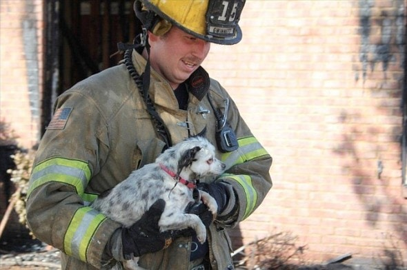 Gwinnett County Firefighter Saves Dog S Life Life With Dogs