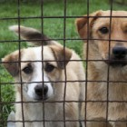 This Thanksgiving, Help Find Homes for Homeless Dogs