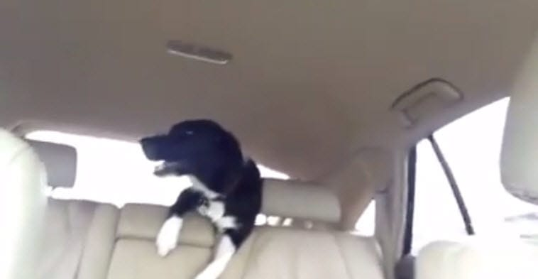 Dog Can't Contain His Excitement