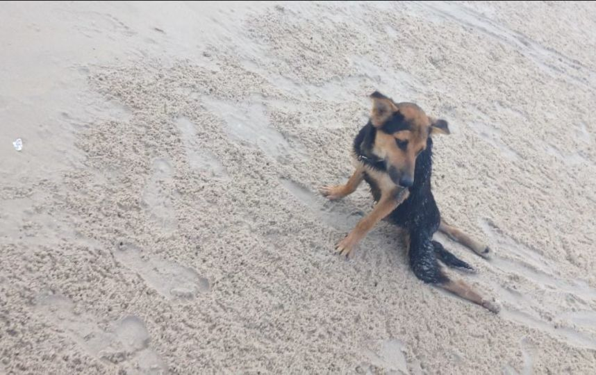 Handicapped Stray Rescued from Thailand Beach Gets New Life in Canada