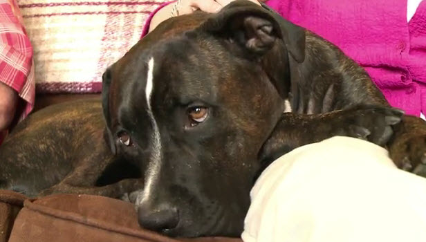 Trucker the Stolen Dog Comes Home 112 Days Later