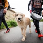 South American Stray Follows Extreme Racing Team and Wins Forever Home in Sweden