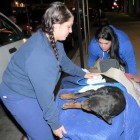 NY Firefighter Hopes to Adopt Rottie Thrown from Moving Car