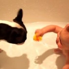 Dog Keeps Baby Happy During Bath Time