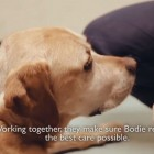 Bodie's Radiation Therapy