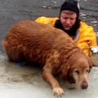 Officer Jumps in Icy Pond to Save 160-Pound Dog