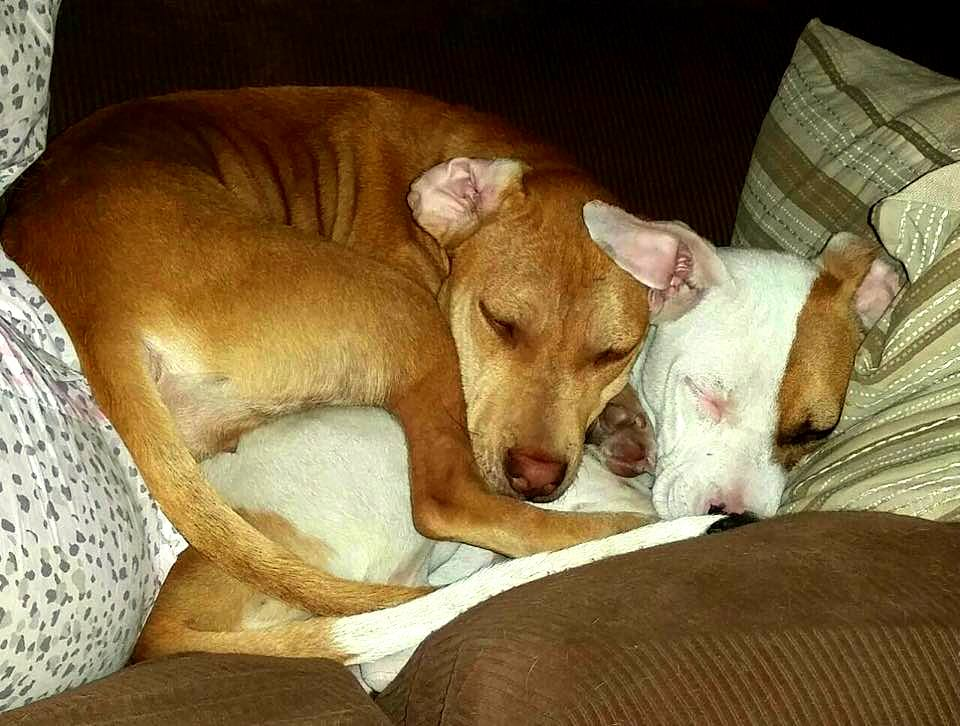 Abused Girls Bond at Shelter, Need a Home Together