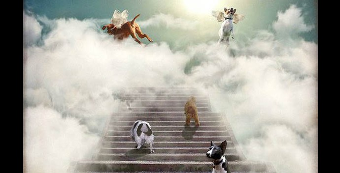 Pope Francis Says All Dogs Go to Heaven