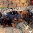 Kitty Gets a Puppy Bath