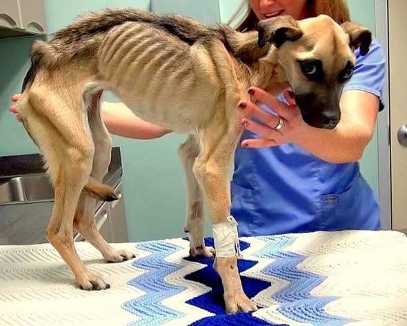12.12.14 - Skeletal Dog Rescued Just Inches from Death1
