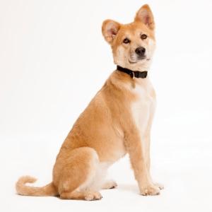 Annie Dog Breed