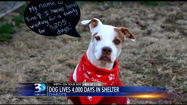 This Dog has Been Waiting in a Shelter for Over 3,000 Days