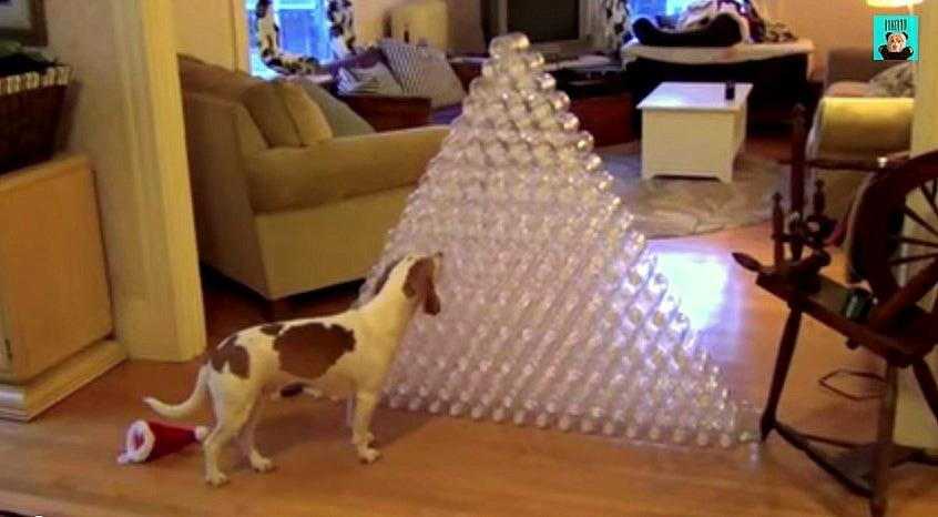Maymo Gets 210 Bottles for Christmas