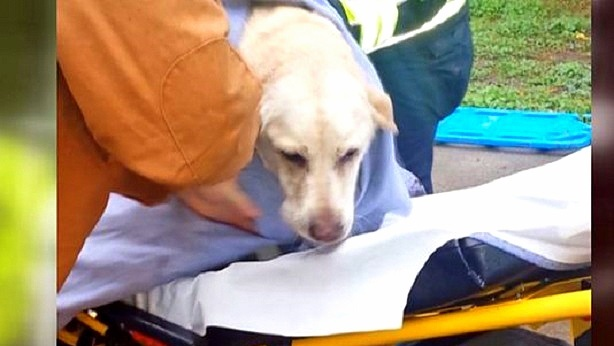 Confused Dog Saved After Running into House Fire