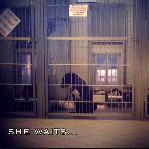 12.18.14 - She Sits in Her Cage Waiting...1