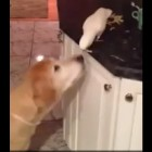 Dog Gets a Snack from Fine Feathered Friend
