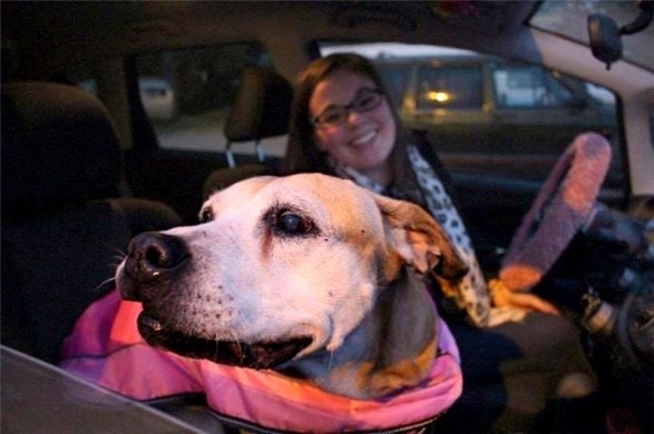 12.2.14 - 13-Year-Old Dog at Shelter for 1000 Days FINALLY Gets a Home2