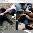 Woman Saves Injured dog; Raises Money for Life-Saving Surgery