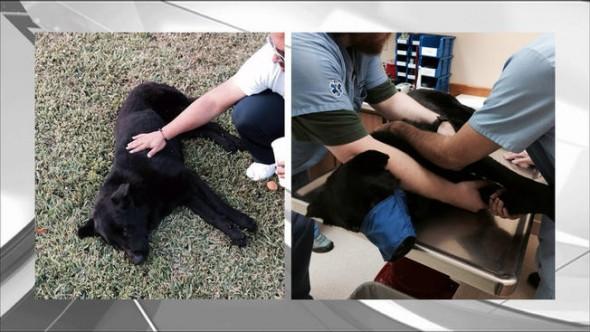 12.22.14 - woman saves injured dogFEAT