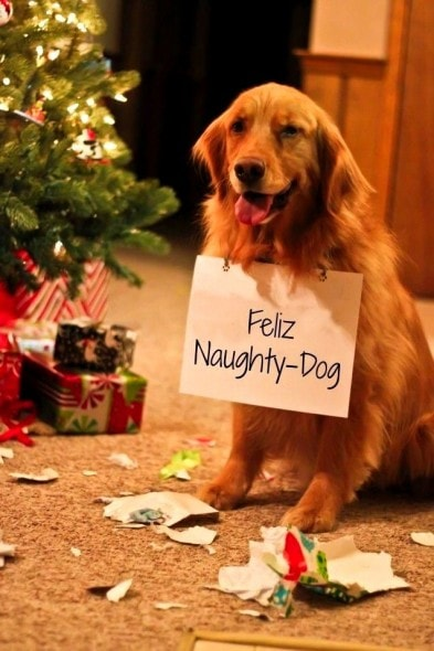 12.24.14 - Cutest Christmas Dogs1