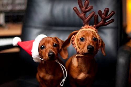 12.24.14 - Cutest Christmas Dogs16