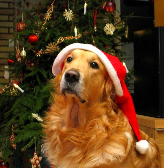 12.24.14 - Cutest Christmas Dogs2
