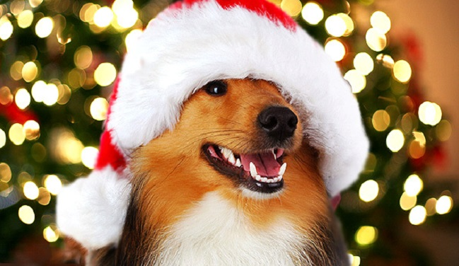 18 Dogs Who Are Ready for Christmas