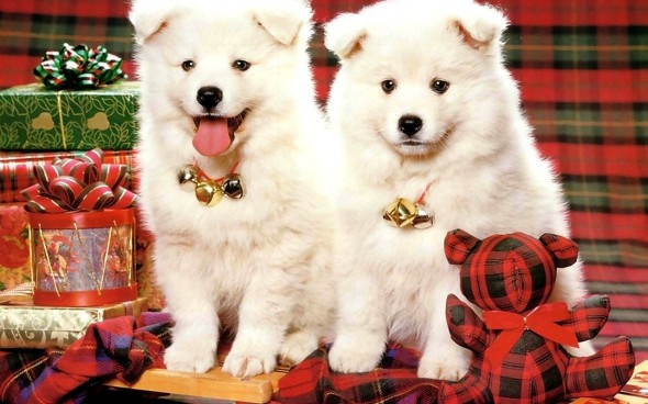 12.24.14 - Cutest Christmas Dogs3