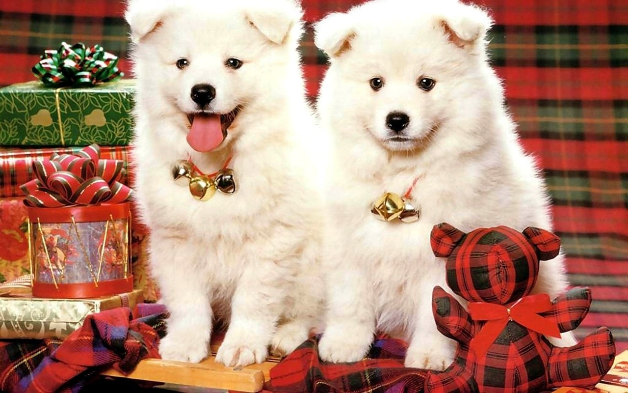 18 Dogs Who Are Ready For Christmas Life With Dogs