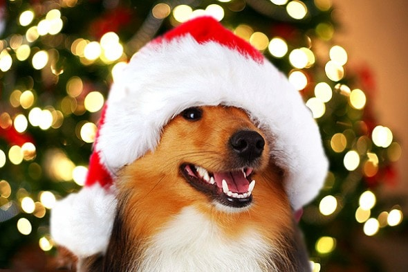12.24.14 - Cutest Christmas Dogs4
