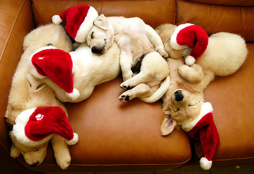 12.24.14 - Cutest Christmas Dogs5