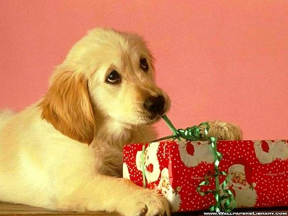 12.24.14 - Cutest Christmas Dogs8