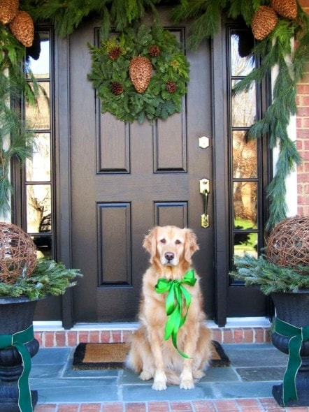 12.25.14 - Beautiful Photos of Dogs at Christmas0