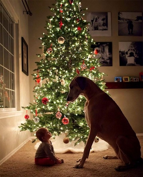 12.25.14 - Beautiful Photos of Dogs at Christmas1