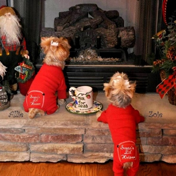 12.25.14 - Beautiful Photos of Dogs at Christmas13