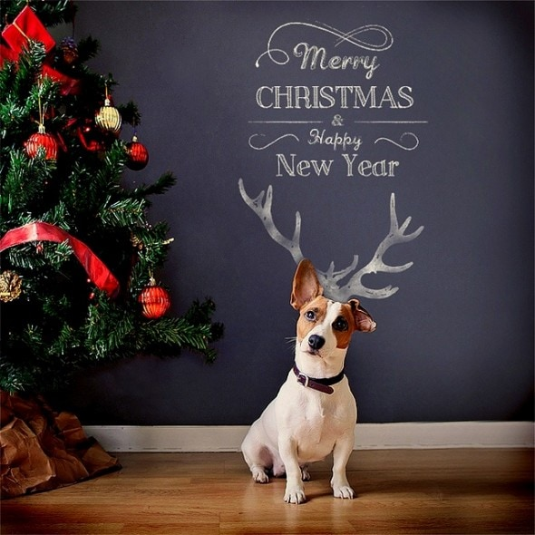 12.25.14 - Beautiful Photos of Dogs at Christmas15