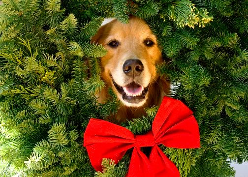 12.25.14 - Beautiful Photos of Dogs at Christmas16