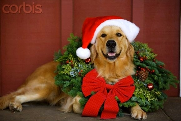 12.25.14 - Beautiful Photos of Dogs at Christmas22