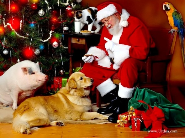 12.25.14 - Beautiful Photos of Dogs at Christmas23